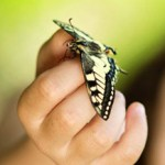 butterfly in childs hand